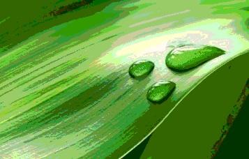 Капли на зелёном листе